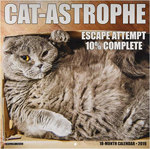 Cat-Astrophe 2019 Wall Calendar