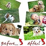 Flea Control Pet Relief, Flea Tick Spray For