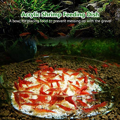 Plato para acuario diseñado para alimentar camarones y reptiles 7