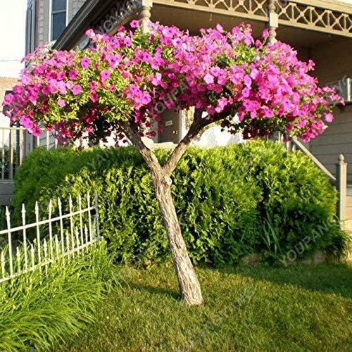 Elitely - Semillas de pétalos de flores para el hogar, jardín, plantas, etc., rosa: Amazon.es: Jardín