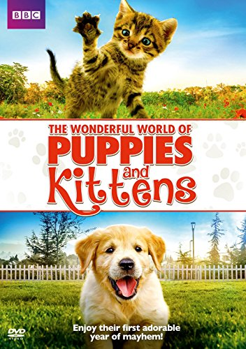 World Kitten - Wonderful World of Puppies & Kittens