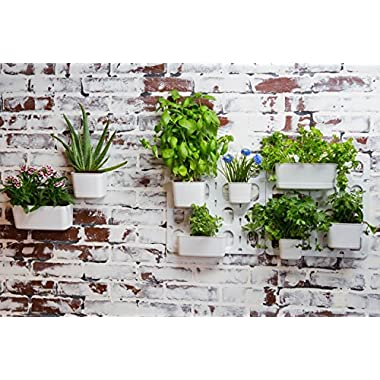 Vertibloom Living Wall Garden Starter Kit - Modular Indoor Vertical Planter System