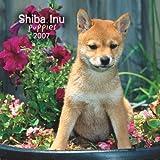 Shiba Inu Puppies 2007 Mini Calendar