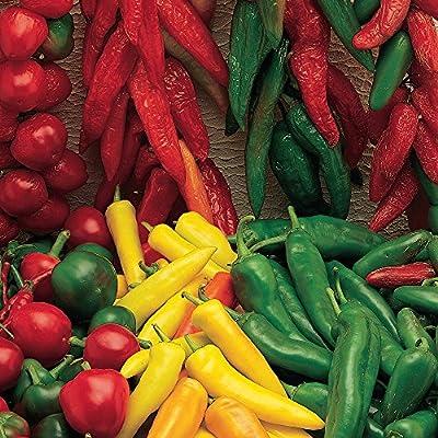 Burpee Hot Salsa Blend Hot Pepper Seeds 200 seeds