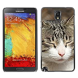 American Shorthair British House Cat - Aluminum Metal&Hard Plastic Back Case Cover - Black - SAMSUNG Galaxy Note 3 III / N9000 / N9005