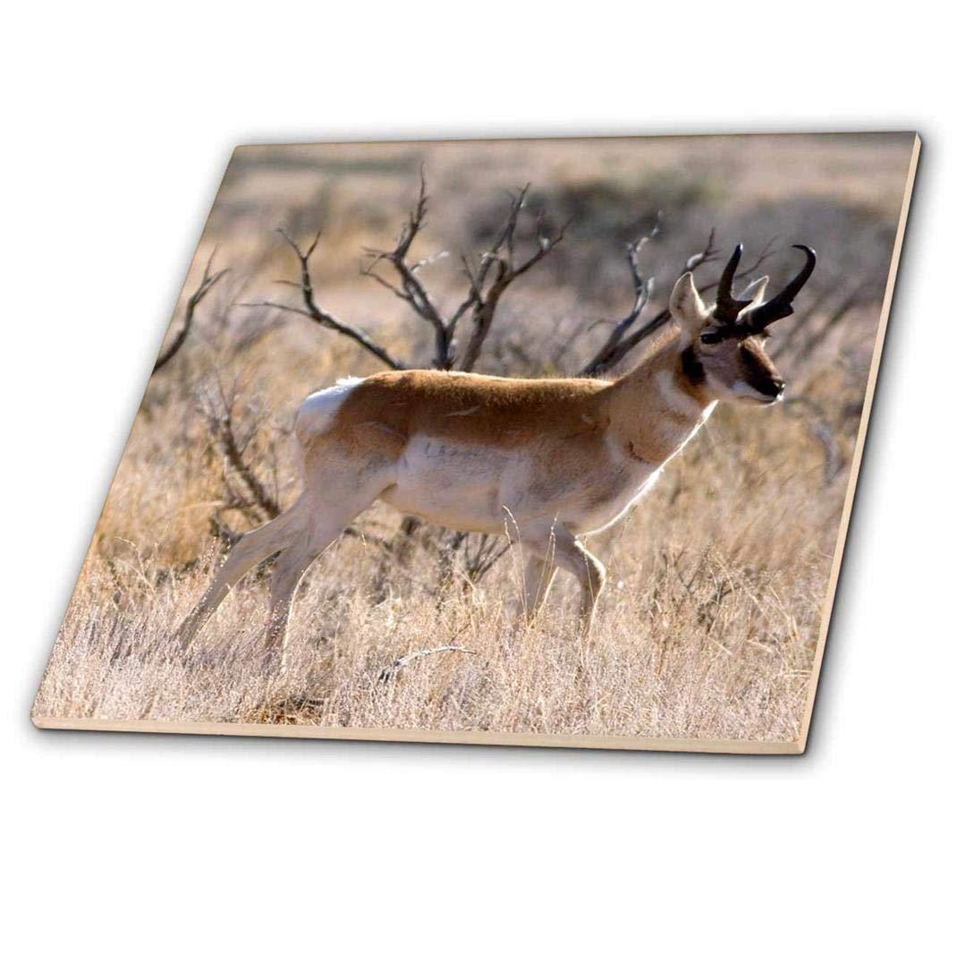3dRose Antelope 6-Inch Na02 Dfr0030 ct/_83717/_2 Frazier David R Ceramic Tile