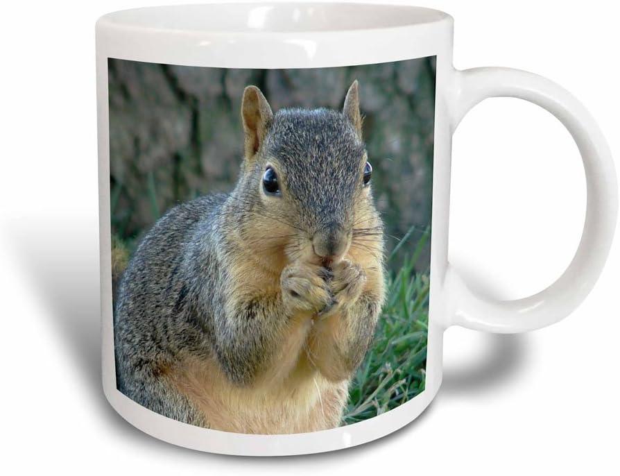 3dRose mug_6451_3 Squirrel Eating Acorns Photographed By Angelandspot Magic Transforming Mug, 11-Ounce