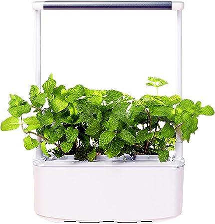 Staright Sistema de cultivo hidropônico com luz LED para cultivo Kit inicial para jardim interno Kits inteligentes de germinação de plantas 3 vasos de plantas para jardinagem doméstica