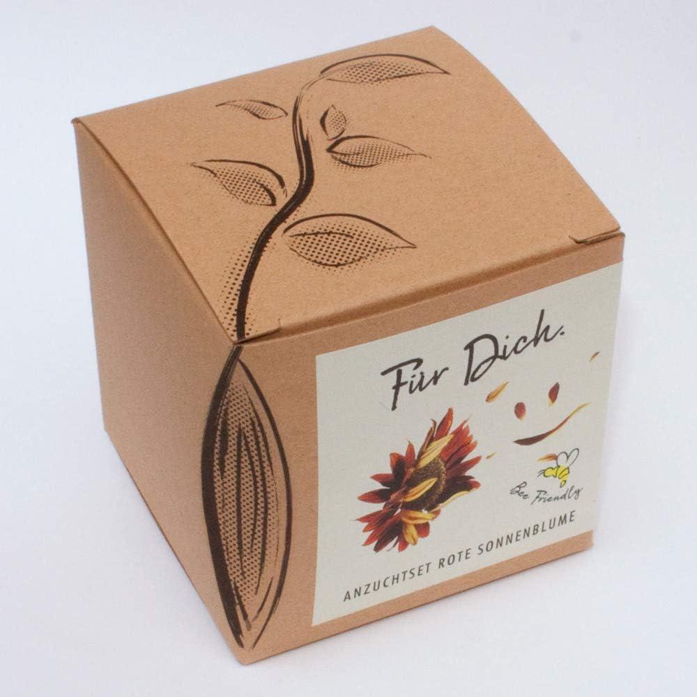 Kr/äuterpaket mit 6 Kr/äutern Geschenk Anzuchtset eine originelle Geschenkidee f/ür praktisch jeden Anlass 350 Samen
