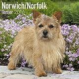 Norwich / Norfolk Terrier Calendar - Breed Specific Norwich / Norfolk Terrier Calendar - 2016 Wall calendars - Dog Calendars - Monthly Wall Calendar by Avonside