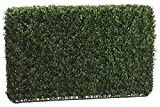 24 Inch Tall Boxwood Hedge Two Tone Green