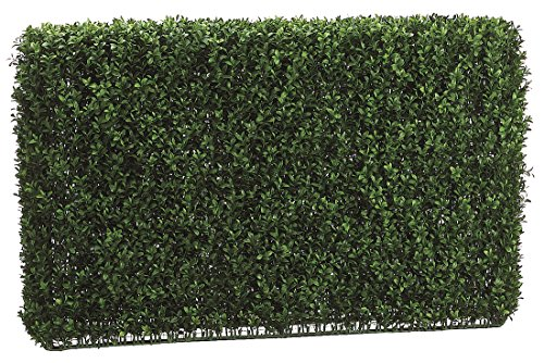 24-Inch-Tall-Boxwood-Hedge-Two-Tone-Green