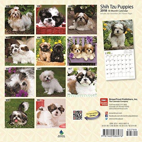 Shih Tzu Puppies 2018 Small Wall Calendar Photo #3