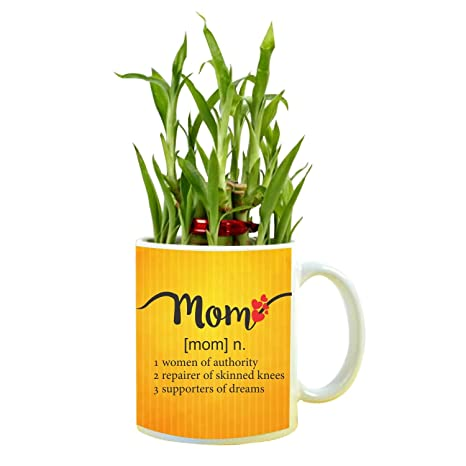 YaYa Cafe Birthday Gifts For Mom Meaning Feng Shui Lucky Bamboo Indoor Mug Planter With 2 Tier Amazonin Garden Outdoors