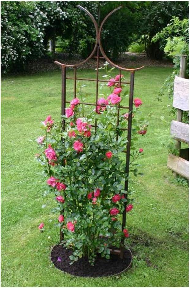 EQT-TEC - Cenefa para Rosales (170 cm, para jardín): Amazon.es: Jardín