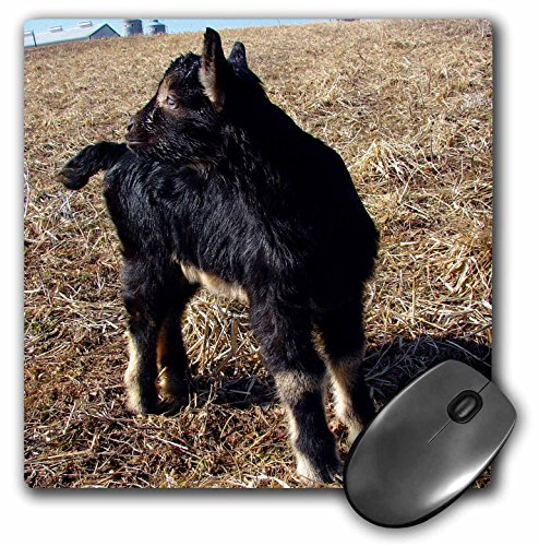 Price comparison product image 3dRose LLC 8 x 8 x 0.25 Inches Alpine Billy Goat Kid by Angle and Spot Mouse Pad (mp_11243_1)