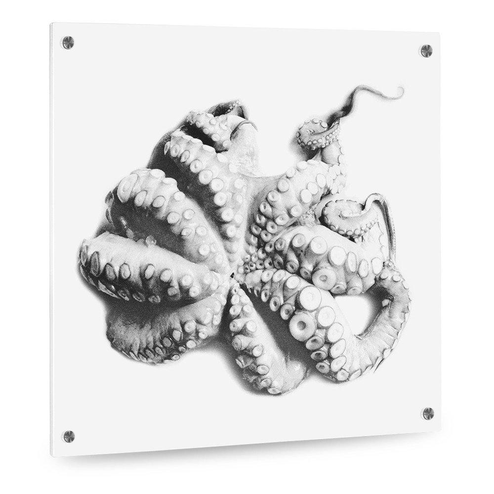 Glas Küchenrückwand Aus Stabilem Sicherheitsglas (ESG)   Motiv: Polpo    Format 50 X 50 Cm   Stylischer Wandschutz Und Spritzschutz Für Herd, Küche  Und ...