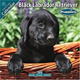 Black Labrador Puppies 2010 Wall Calendar #10200-10
