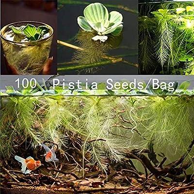 hudiemm0B Pistia Seeds, 100Pcs Pistia Seeds Home Garden Pond Aquatics Plant Pool Aquarium Fish Tank Decor Pistia Seeds: Sports & Outdoors
