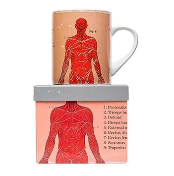 Magpie Jay taza anatómica de gran tamaño Café Té - Sistema muscular.: Amazon.es: Hogar