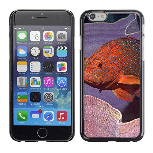 """Premio Sottile Slim Cassa Custodia Case Cover Shell // V00003166 poissons colorés // Apple iPhone 6 6S 6G PLUS 5.5"""""""