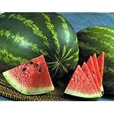 Watermelon, Jubilee, Heirloom, Organic 20 Seeds, Large, Sweet N Delicious