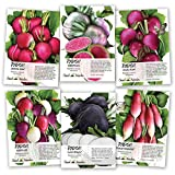 Multicolor Radish Seed Packet Collection (6 Individual Packets) Non-GMO Seeds by Seed Needs
