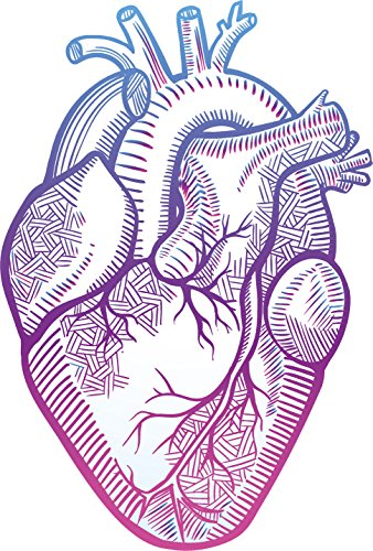 Pretty Pastel Ombre Anatomical Heart Drawing Vinyl Decal Sticker 4quot Tall