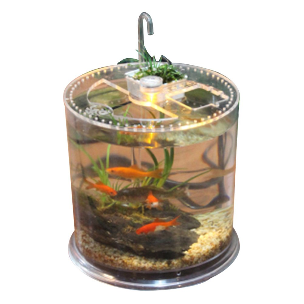 Office table fish tank, suitable for Spider lizard, fish, reptile perfect ecological landscape box (Fish tank)