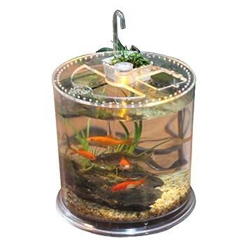 OMEM Tanque de Peces de Oficina, Apto para Lagarto Spider, Peces, Reptiles, Paisaje ecológico Caja: Amazon.es: Productos para mascotas
