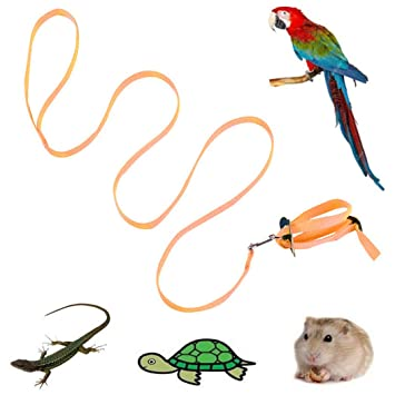 Legendog Correa De ArnéS De Aves Beauty Nylon - ArnéS Ajustable ...