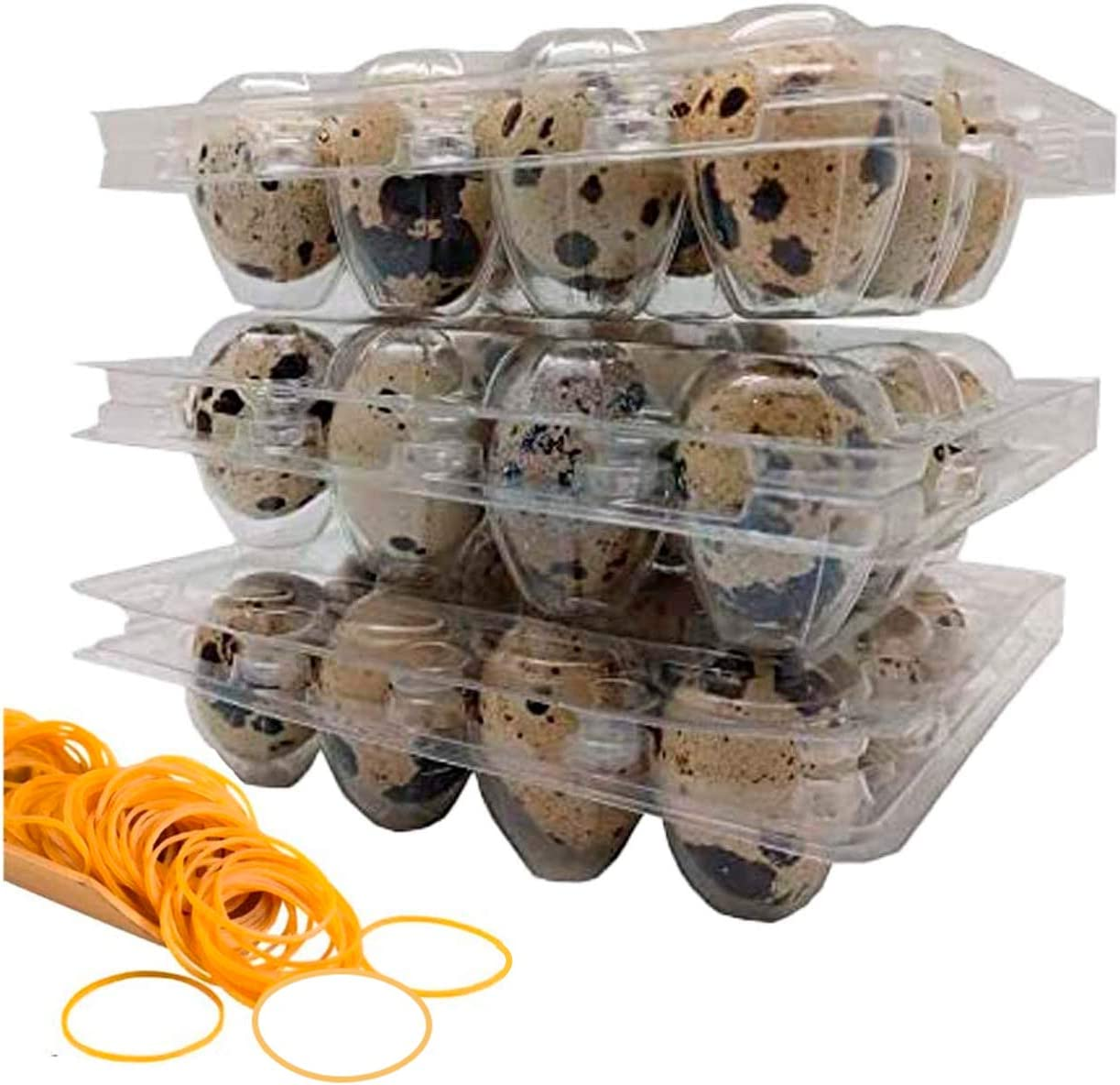 100 Clear 12 Cavity Quail Egg Cartons by Quail Egg Cartons with 100 Pcs Rubber Bands - Bulk Carton for Dozens of Small Eggs, Quail, Pheasant, or Grouse, Cartons Only No Eggs Included…