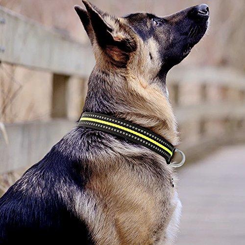 Vizbrite Dog Collar, Night Reflective Nylon Pet Collar, Ajustable Dog Collar for Small Medium Large X-Large Dog (X-Large, Green/Black
