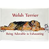 Exhausted Welsh Terrier Rectangle Magnet by CafePress