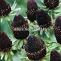 Rare flower,50pcs/lot Rudbeckia hirta Coneflower, 'Green Wizard' flower seed beautiful bonsai plant home garden free shipping