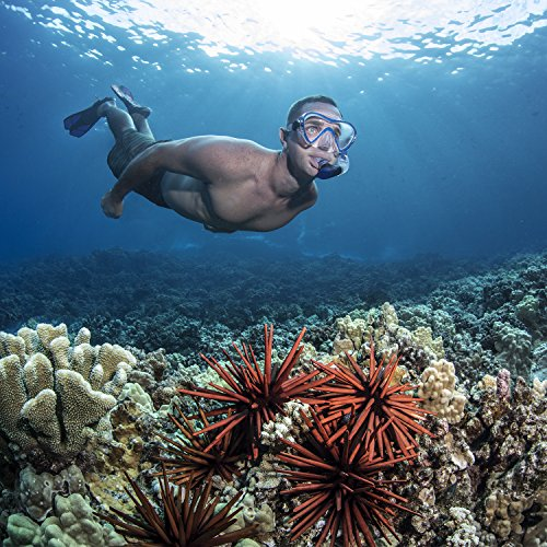 The 8 best neon underwater