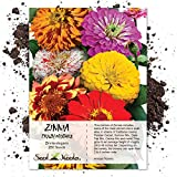 Package of 250 Seeds, Zinnia Crazy Mixture (Zinnia elegans) Non-GMO Seeds By Seed Needs