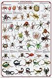 Arachnida Poster - Spiders, Scorpions, Ticks and More