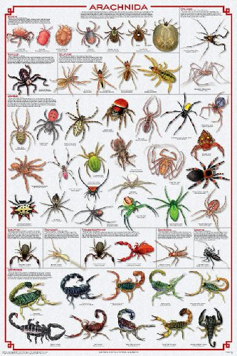 Arachnida Poster - Spiders, Scorpions, Ticks and More
