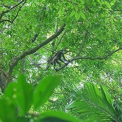 2420 Chaguantique Nature Reserve, El Salvador
