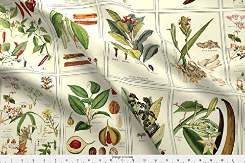 Spoonflower Herb Fabric Botanical Spices - 24In by Studiofibonacci Printed on Basic Cotton Ultra Fabric by the Yard - Botanical Print Fabric