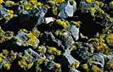High angle view of lava and stones covered with moss, Iceland 30x40 photo reprint
