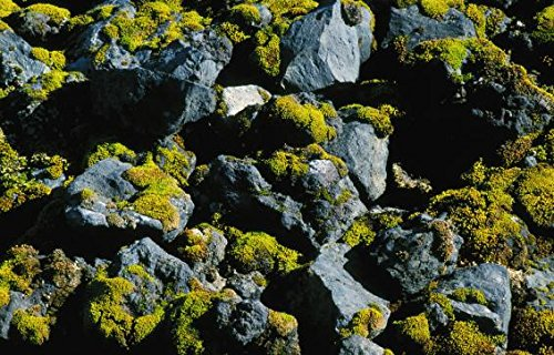 High angle view of lava and stones covered with moss, Iceland 30x40 photo reprint by PickYourImage