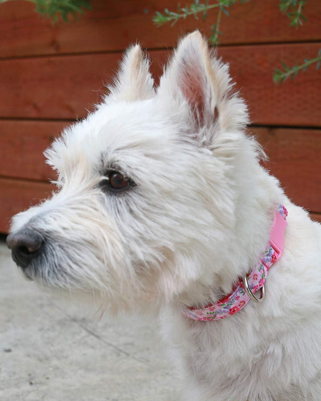 Taglory Collare Cane Regolabile,Addestramento Collari per Cani di Piccola Taglia,Stile Unico 25-40cm Fiore Nero