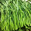 XKSIKjian's Garden 400Pcs Organic Water Spinach Seeds Ornamental Plant Home Yard Office Decor Non-GMO Seeds Open Pollinated Seeds for Planting - Water Spinach Seeds