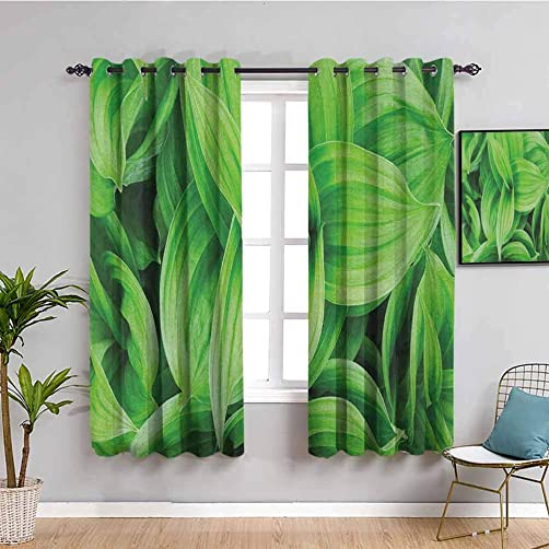 Plant Kitchen Curtain, Curtains 84 inch Length Close up Beautiful Tropic Foliage Pattern Helleborus Leaves Natural Herbs Wildflowers Bring Beauty Lime Green W84 x L84 Inch