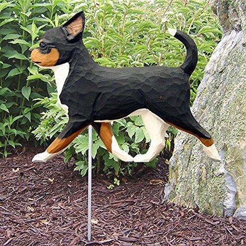 Tri Chihuahua - 4