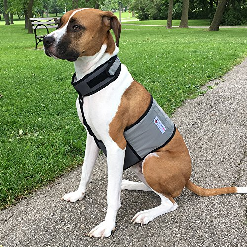 "CoolerDog Dog Cooling Vest and Cooling Collar - Ice Vest for Dogs Medium (22"" to 27"" Girth)"