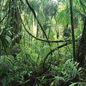 Amazon Com Gladsbuy Vibrant Tropical Rainforest 10 X 10