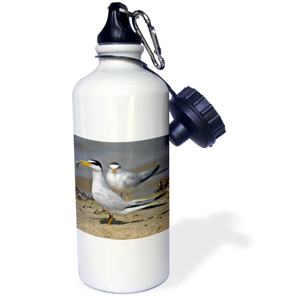 3dRose wb/_146715/_1Least Tern bird with fish Galveston USA-US44 LDI0579-Larry Ditto Sports Water Bottle 21 oz Texas White